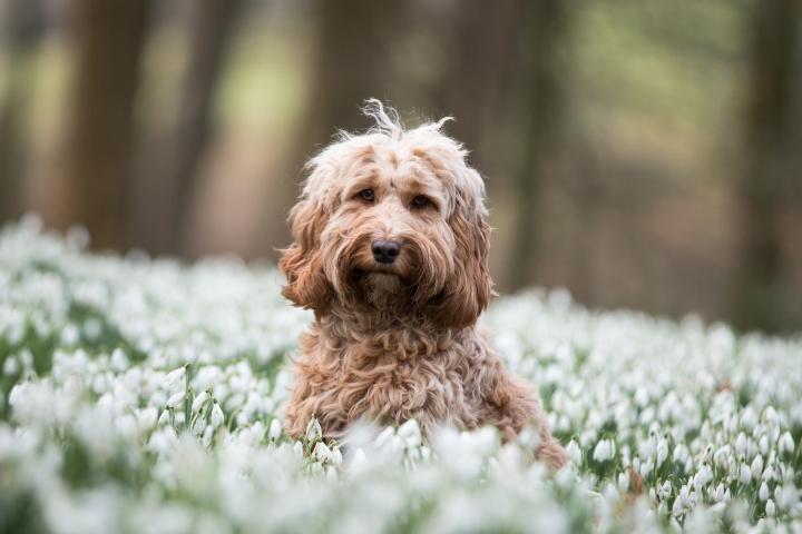 Rococo Garden – DogFriendly