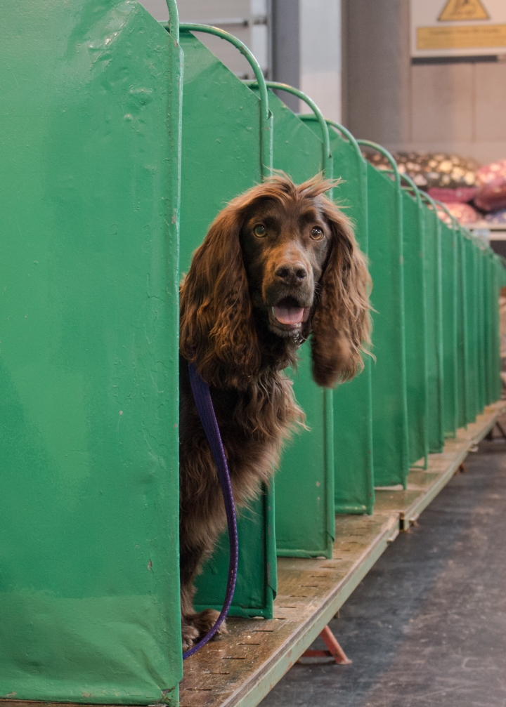 Planning for Crufts