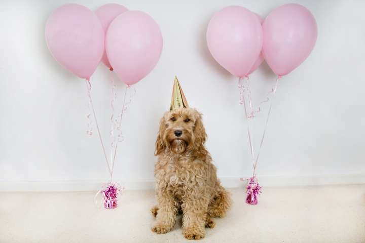 Wilma's 1st Birthday
