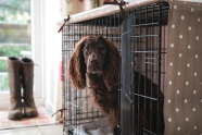 The Cosy Canine Company