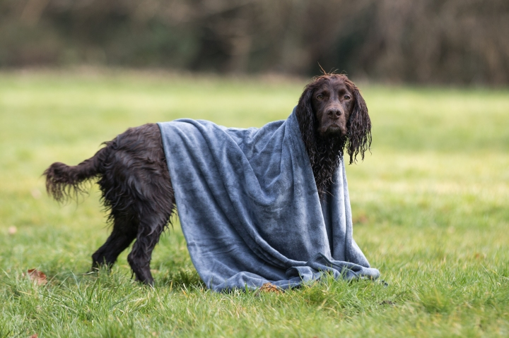 Spaniel Proof : Microfibre Dog Towels