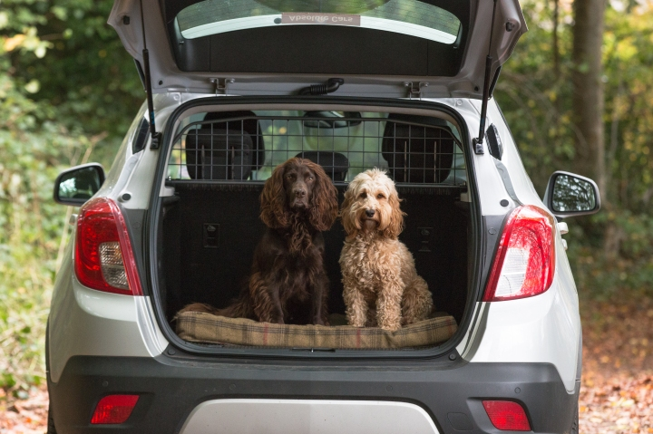 5 Car essentials for your dog