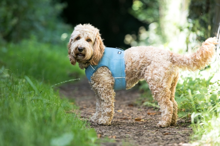 The best cooling coats for dogs