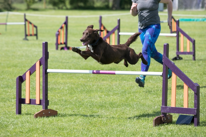 How to start Dog Agility
