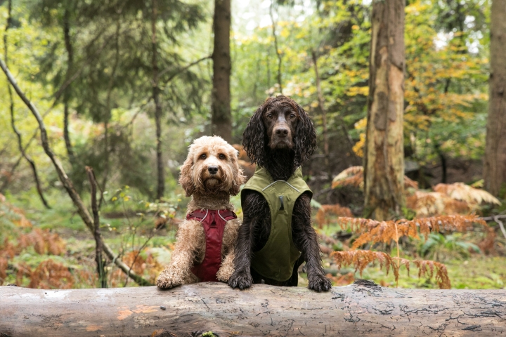 The Forest of Dean; with Ruffwear