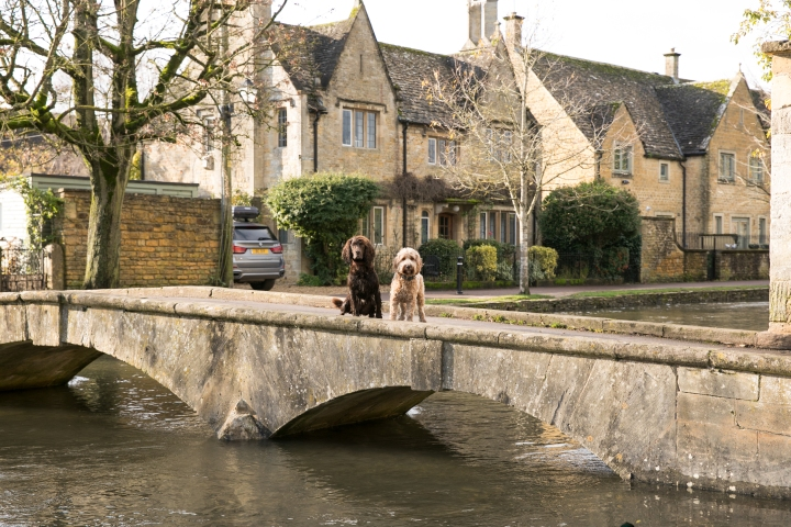 Dog friendly days out in the Cotswolds